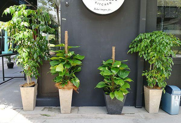 Plant Rental, Bukit Jelutong