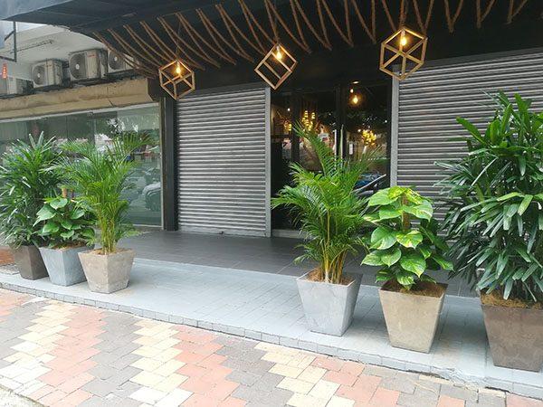 Plant Rental, Bangsar